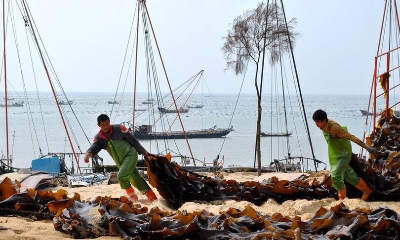 莆田商标注册要闻:南日海带获评地理标志证明商标