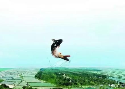 """菏泽""""郓城黄河鲤鱼""""提交全国地理标志证明商标!"""