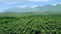 苗木属于商标注册的哪一个分类类别?