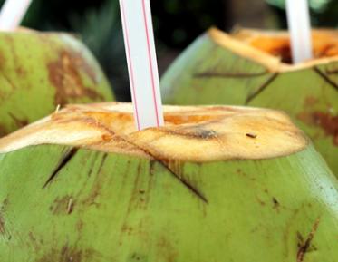 商标申请驳回复审行政纠纷:椰树国宴饮料相关商标申请被驳回
