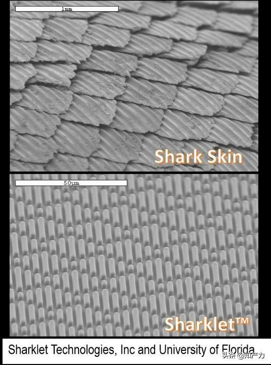 罗永浩刚刚发布的Sharklet,关键商标竟然已经被别人注册了