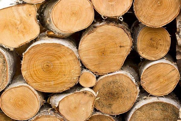 未加工木材在商标分类表里属于哪类商标